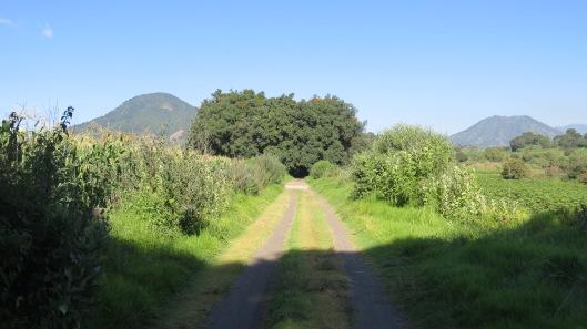 """(""""los caminos, aún inalterables"""". Foto: M.S.)"""