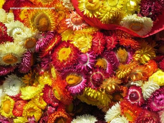 (Flores de inmortal. Foto: M.S.)